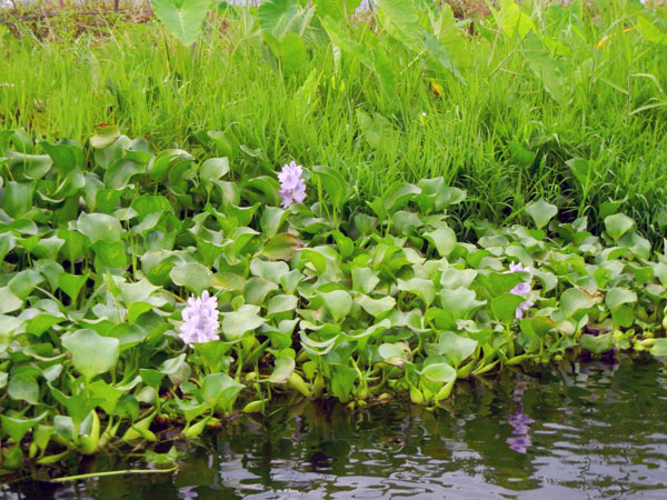 Inle Lake_birmania_viaggiandovaldi